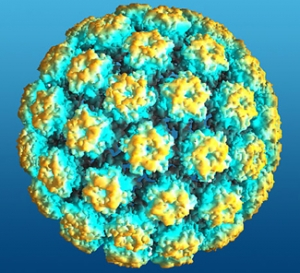 HPV_small